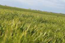 Газонный травостой